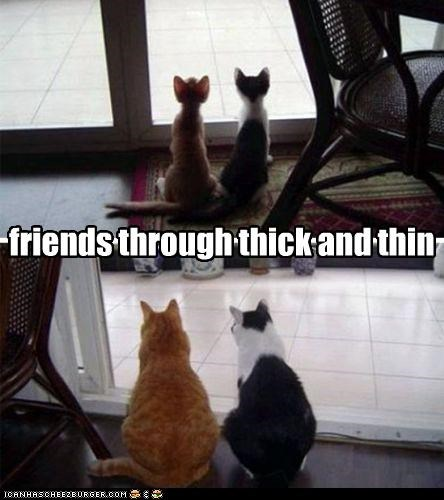aging caption captioned cat Cats figure of speech friends growing up Hall of Fame kitten now then thick thin - 4547596288