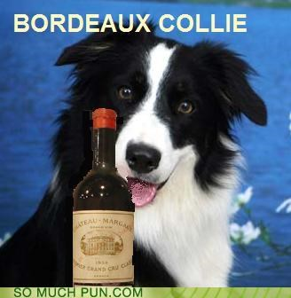 alcohol bordeaux border collie drinking drunk hooch pooch rhyme rhyming