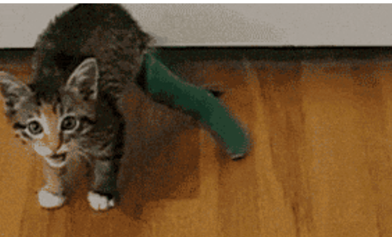 gifs of cats acting like liquid material