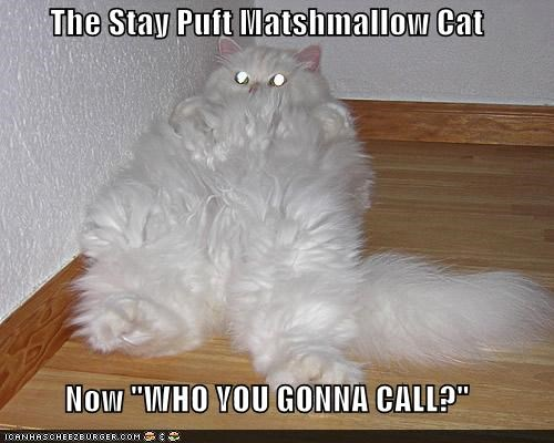 caption,captioned,cat,famous,Ghostbusters,Hall of Fame,marshmallow,phrase,quote,stay puft,Theme Song,who you gonna call