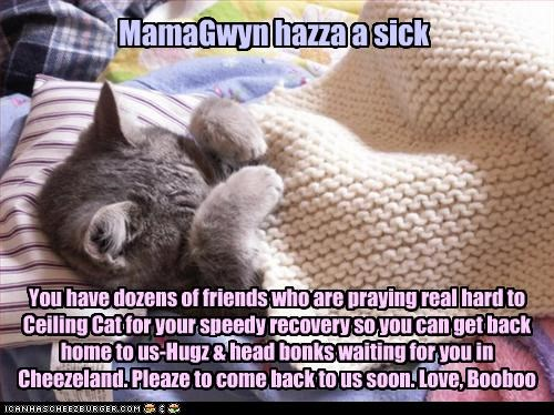 MamaGwyn hazza a sick You have dozens of friends who are praying real hard to Ceiling Cat for your speedy recovery so you can get back home to us-Hugz & head bonks waiting for you in Cheezeland. Pleaze to come back to us soon. Love, Booboo