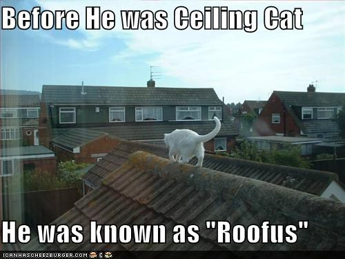 before caption captioned cat ceiling cat name pun roof roofus walking - 4549244160