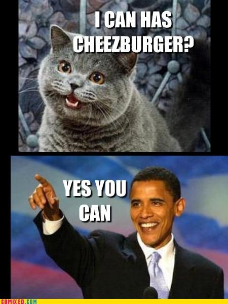 Caturday happy cat hope I Can Has Cheezburger obama - 4549542912