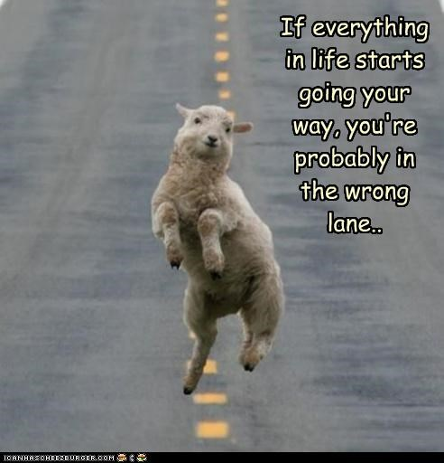 caption captioned hypothetic if lamb lane road running sheep then wisdom wrong