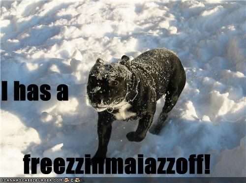 cold do not want freezing french bulldogs frozen i has snow snowy - 4549839360