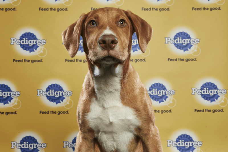 dogs super bowl Puppy Bowl cute funny - 4549893