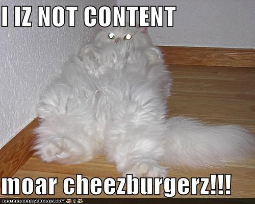 Cheezburger Image 4550135296