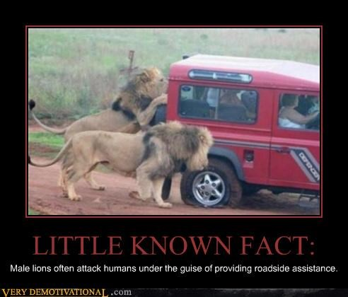 assistance,car,lions,stuck