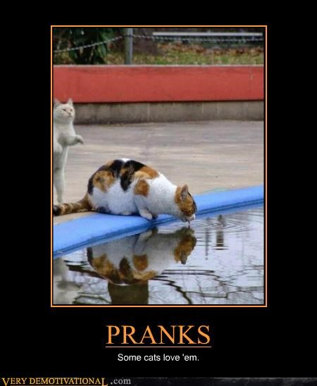 Cats,pool,prank,water