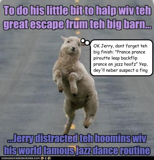 """To do his little bit to halp wiv teh great escape frum teh big barn... ...Jerry distracted teh hoomins wiv his world famous jazz dance routine OK Jerry, dont forget teh big finish: """"Prance prance piroutte leap backflip prance an jazz hoofz"""" Yep, dey'll neber suspect a fing"""