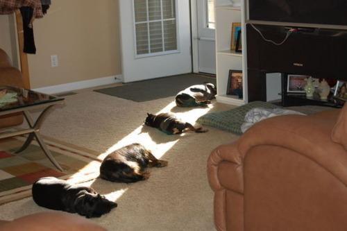 doggeh Sundog - 4550897408