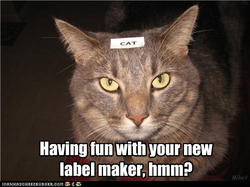 annoyed caption captioned cat fun having label label maker maker question sarcastic upset - 4551071488