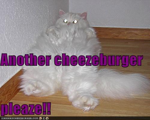 Cheezburger Image 4551539712