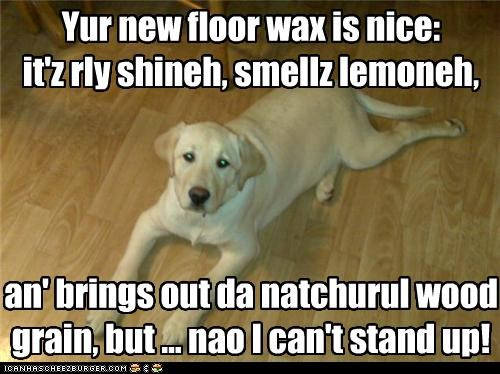 but,caveat,complaint,compliment,concern,floor,labrador,new,nice,praise,wax