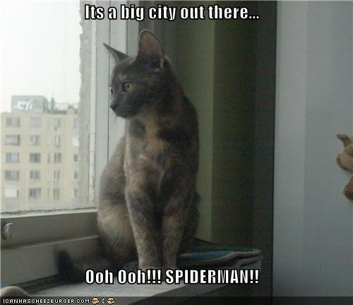 Its a big city out there...  Ooh Ooh!!! SPIDERMAN!!