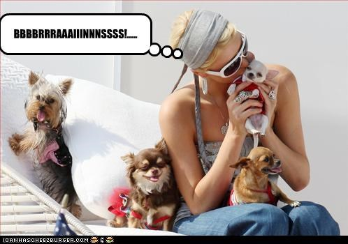 animals celeb dogs funny paris hilton pets - 4552186624