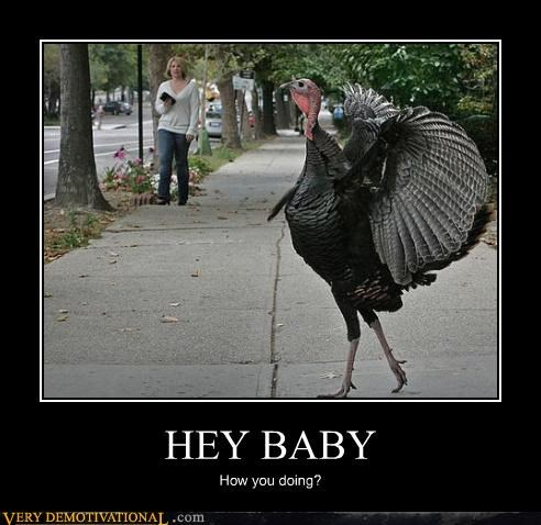 animal hey baby Turkey wtf - 4552490240