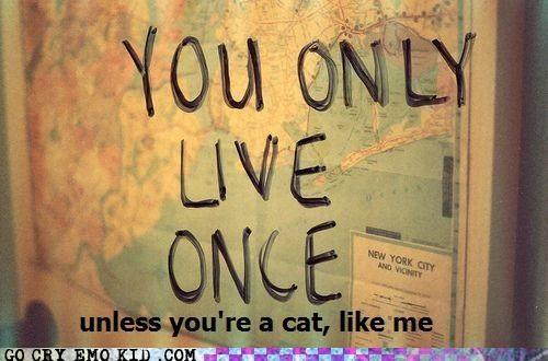 9 lives cat life - 4552648192