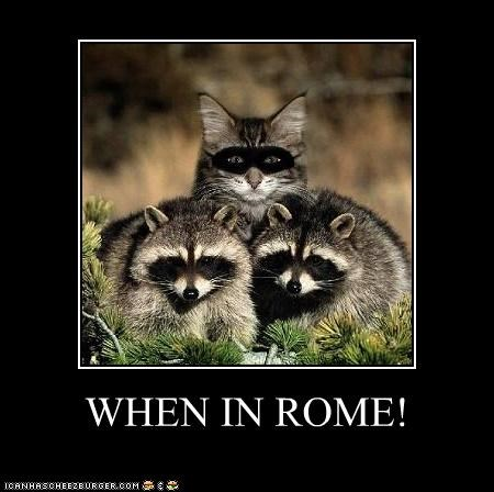 blending in,caption,captioned,cat,cliché,disguise,mask,raccoon,raccoons,saying,when in rome