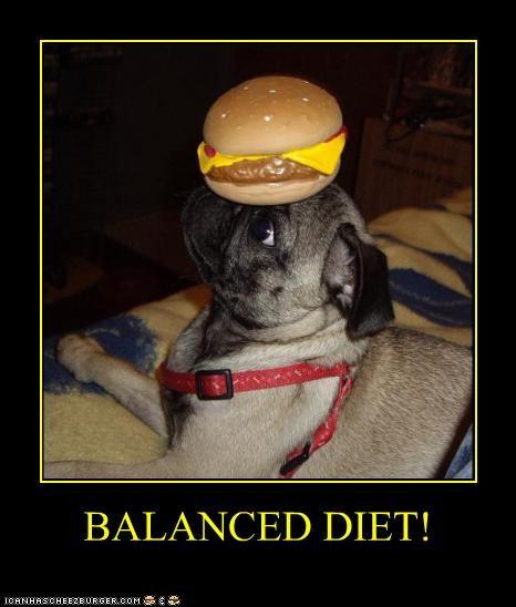Cheezburger Image 4552991744