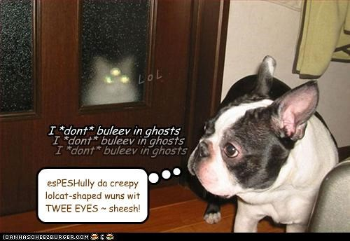 believe,disbelief,dont,french bulldogs,ghosts,reassuring,scared