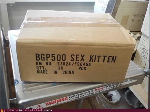 box wtf - 4553506048