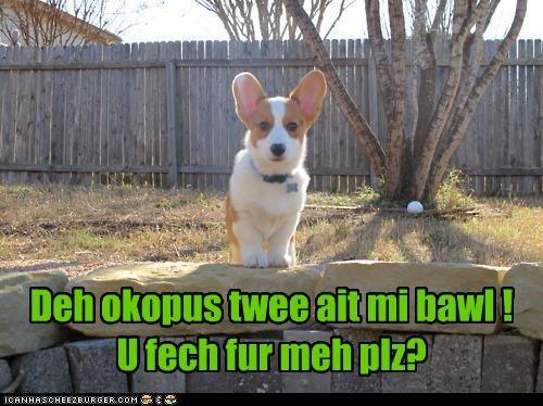 Cheezburger Image 4553832960