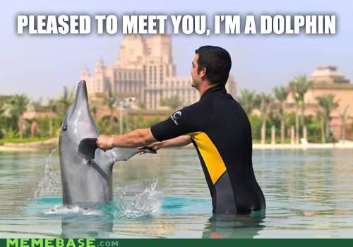 dolphin,pleased to meet you,polite