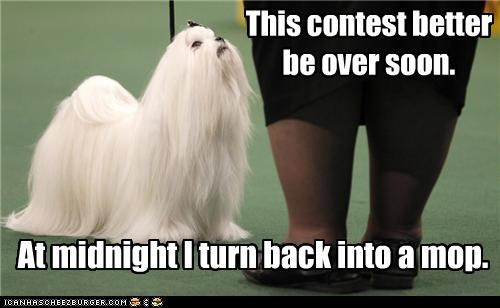 This contest better be over soon. At midnight I turn back into a mop.