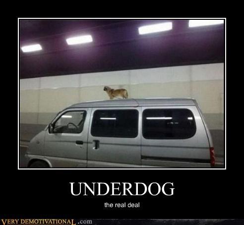 animals bad idea dogs van wtf - 4553956864
