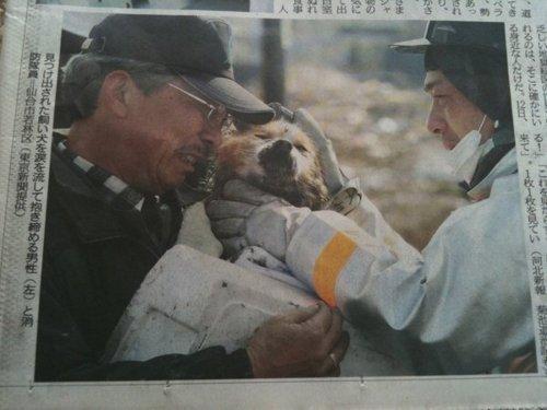2011 Sendai earthquake,doggeh,Heartwarming Tearjerker