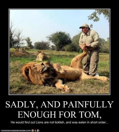 SADLY, AND PAINFULLY ENOUGH FOR TOM, He would find out Lions are not ticklish, and was eaten in short order...