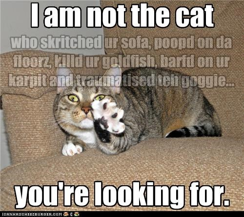 attempting caption captioned cat force Hall of Fame mind control not quote reference star wars - 4555009024