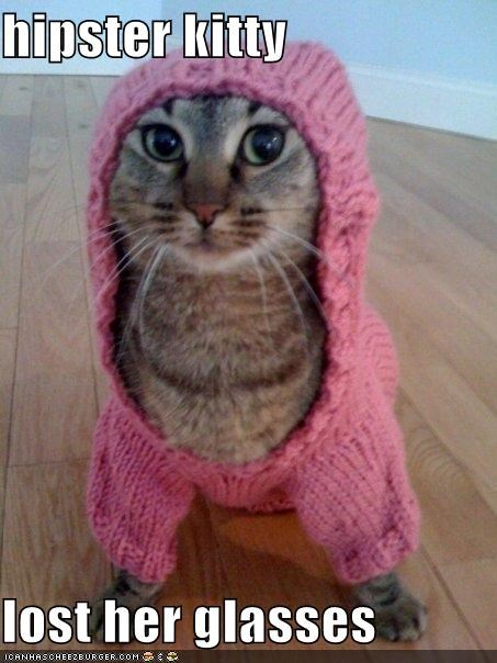 hipster kitty  lost her glasses
