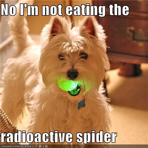 ball,denial,eating,glowing,no,not,radioactive,spider,toy,west highland white terrier