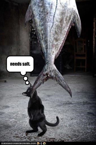 caption captioned cat fish needs noms salt - 4555220992