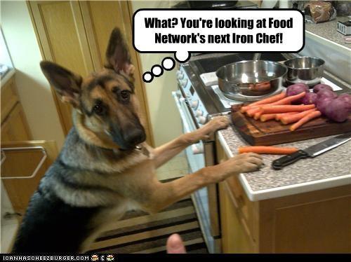 Cheezburger Image 4555330304