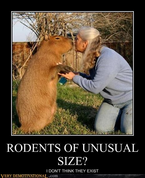 RODENTS OF UNUSUAL SIZE? I DON'T THINK THEY EXIST