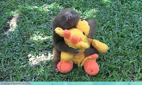 cuddling,do want,giraffes,sloth,stuffed animal,toy