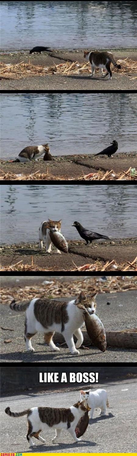 animals bird Cats Caturday fish Like a Boss nature - 4556914176