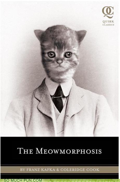 cat funny meow parody rewrite wtf - 4557551360