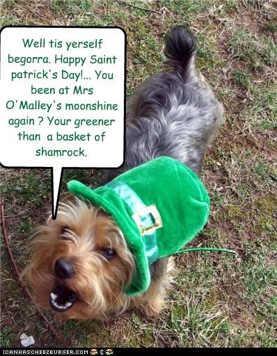 alcohol celebrating drunk hat irish just saying moonshine observation saint-patricks-day yorkshire terrier