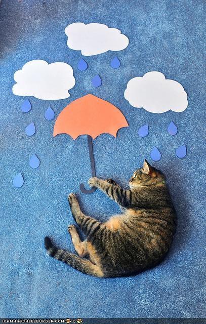 art carpet cyoot kitteh of teh day paper rain umbrella weather - 4558718976