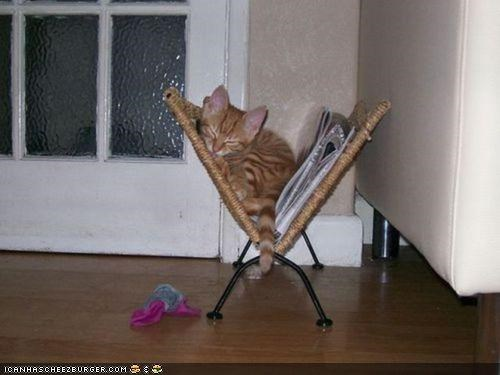 comfort is relative cyoot kitteh of teh day furniture magazine rack nap odd sleeping - 4558719488