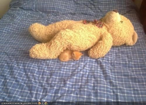cyoot kitteh of teh day,friends,nap,sleeping,stuffed animals,teddy bear,tiny