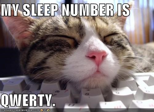 asleep caption captioned cat keyboard number qwerty sleep sleep number sleeping