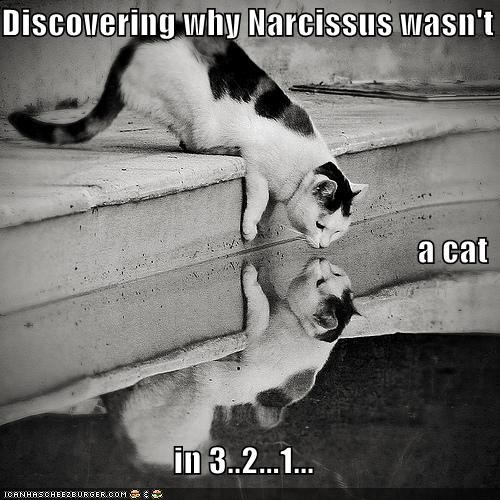 Discovering why Narcissus wasn't  a cat in 3..2...1...