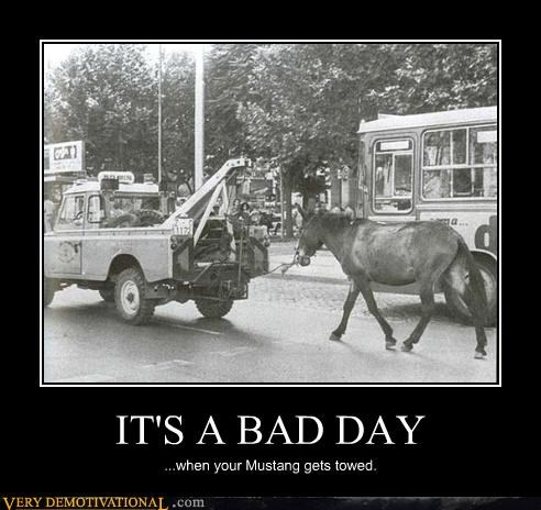 bad day,horse,mustang,towed,wtf