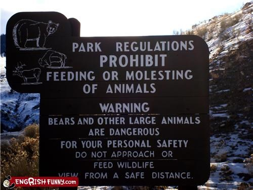 animals notice sign wildlife
