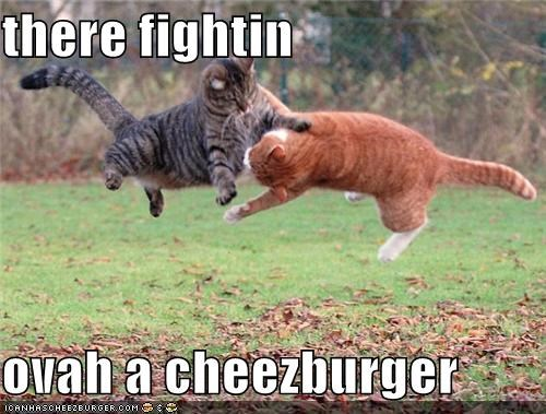Cheezburger Image 4560046080